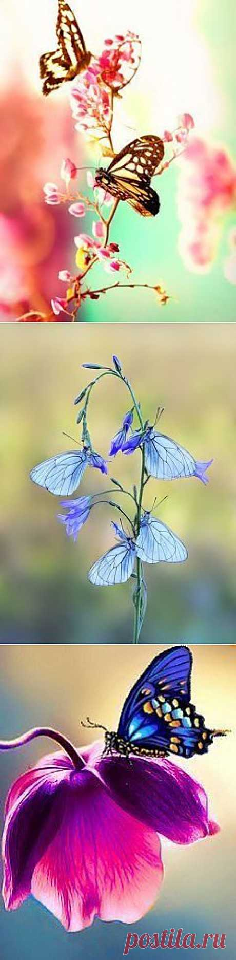 Дыхание жизни: чудо бабочки