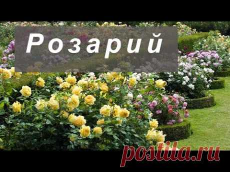 Розарий: популярные виды розариев и их особенности Розарий - обустройство, виды, разнообразие. Садовый розарий это отличное украшение участка. Устройство розария. Сорта и виды роз для розария. Фото розария.Ро...