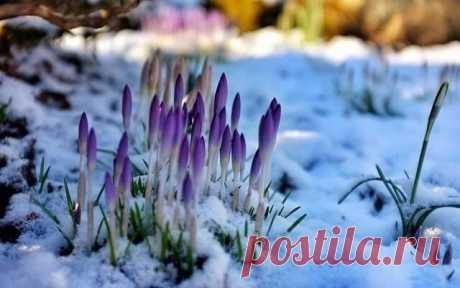 Прогноз  погоды  безутешен...  Но  мы  то  знаем ...   быть  Весне...