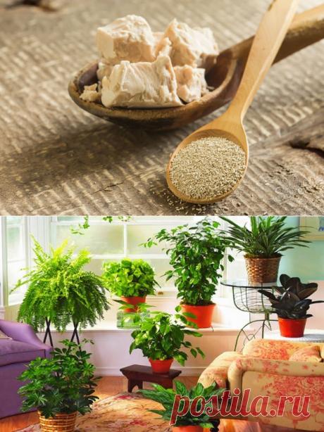 Супер-раствор для роста комнатных растений. Секретный ингредиент!   Цветы в квартире и на даче – от Радзевской Виктории   Яндекс Дзен