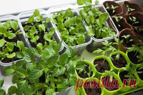 Las plantas en febrero: ¿que es hora de sembrar?