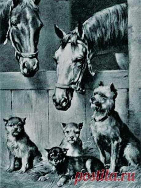 Три разные породы собак, которые на самом деле принадлежат одной группе | Своих не едим. | Яндекс Дзен