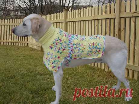 Одежда для Собак своими руками — Схемы и Выкройки - Самоделкино - медиаплатформа МирТесен
