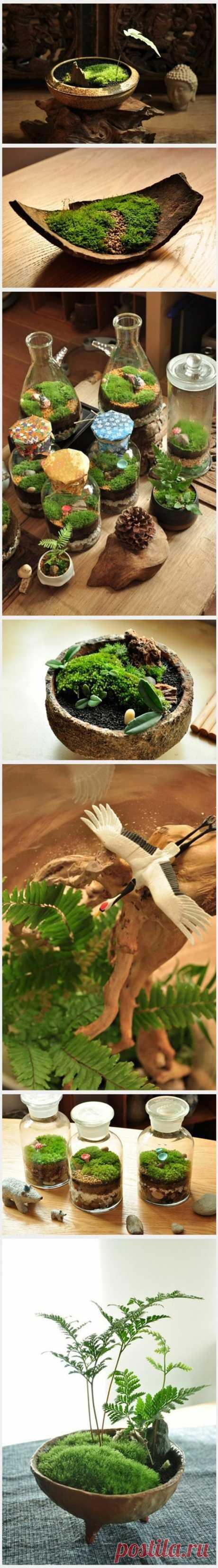 微型盆栽-堆糖,美好生活研究所