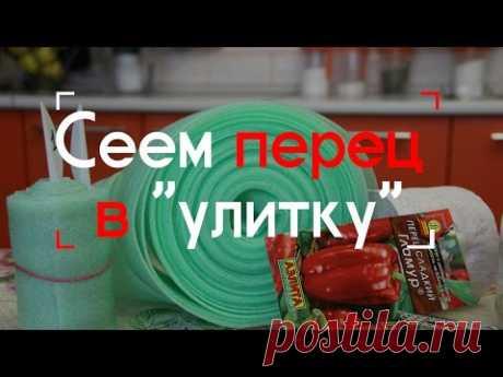 """Sembramos el pimiento en """"улитку""""."""