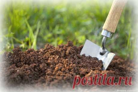 Как проверить кислотность почвы - быстро и без денежных трат   Дневник садовода   Яндекс Дзен