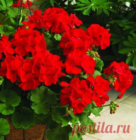 25 красивых комнатных растений с красными цветами | Школа Цветоводства | Яндекс Дзен