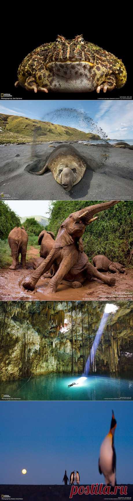 Из коллекции National Geographic..