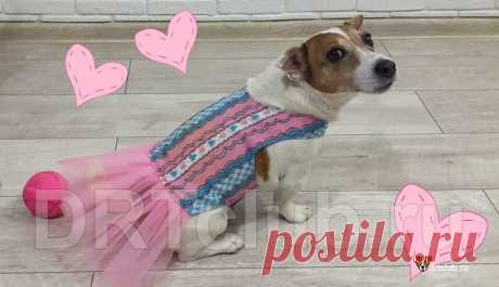 Как сшить платье для собаки своими руками