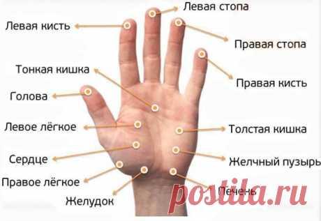 Массаж пальцев рук для здоровья организма Как выполнять массаж пальцев рук. Эффективность массажа при лечении печени и суставов. Узнайте, как массаж пальцев влияет на похудение