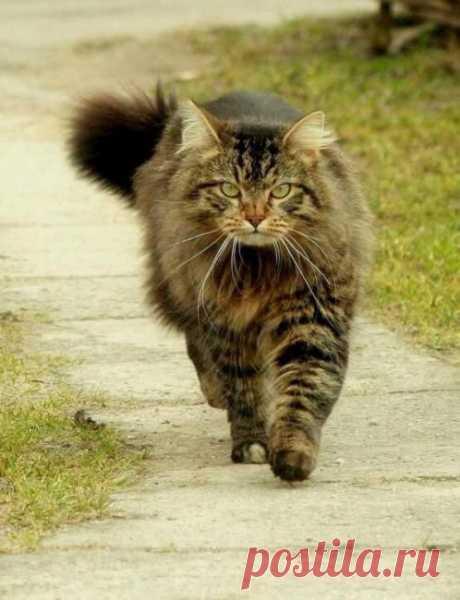 Деловой кот | Kote.Rjaka.com