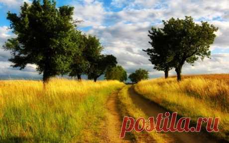 Дорога поле Скачать картинку 2560x1600 Дорога поле