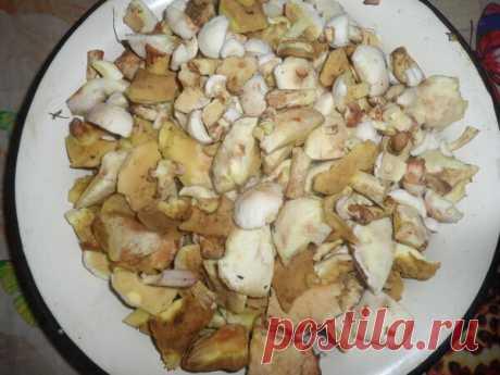 Мой способ обработки грибов поможет на 100% сохранить их вкус и полезные свойства | Моя домашняя кухня | Яндекс Дзен