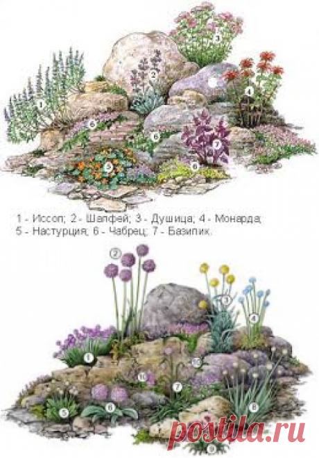 цветы для альпийской горки - Поиск в Google