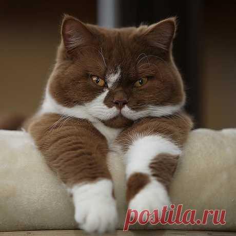 Шоколадные коты!Какая красота.
