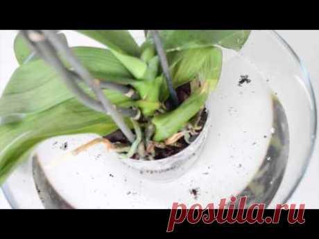 El vidriado de la orquídea, las reglas básicas