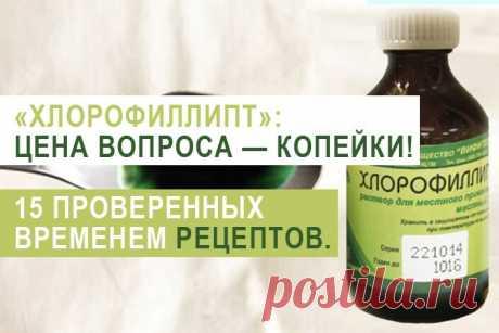 «Хлорофиллипт»: цена вопроса — копейки! 15 проверенных временем рецептов. - Полезные советы