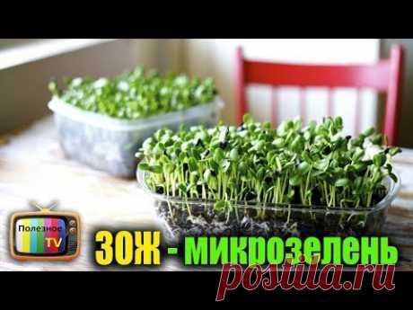 Супер тренд ЗОЖ - микрозелень
