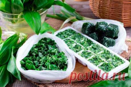 Как заморозить зелень на зиму в морозилке: кулинарные советы Как заморозить зелень на зиму в морозилке. Какую зелень можно замораживать. Какие способы для заморозки применяются и как долго хранится.