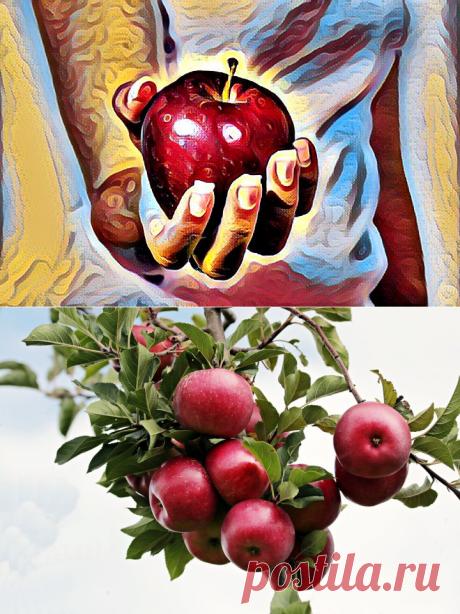 В сезон яблок-яблочная диета+вода: мягкое очищение и похудение. Сначала уходит жир с живота   Похудеть-помолодеть   Яндекс Дзен