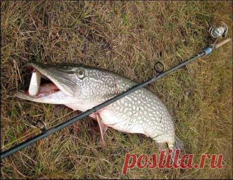 Оснастка для ловли щуки на спиннинг   Рыболовные хитрости   Яндекс Дзен