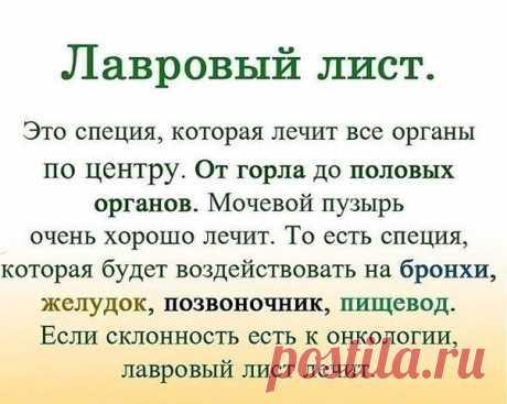ЛАВРОВЫЙ ЛИСТ В ПОМОЩЬ | OK.RU