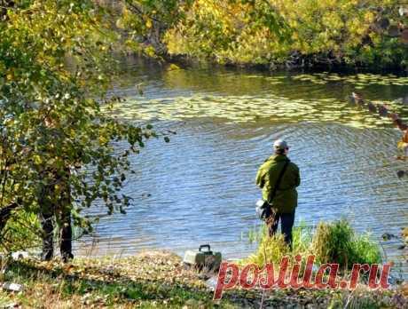 Ручейник на рыбалке: 5 особенностей природного рыбьего корма   Рыбалка для людей   Яндекс Дзен