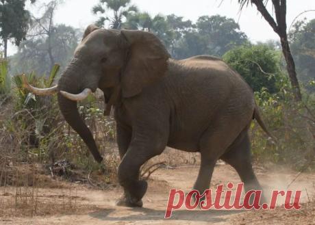 7 животных с впечатляюще долгой жизнью   PetTips