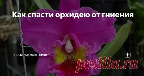 Как спасти орхидею от гниения