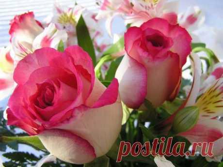 Для хорошего настроения цветы фото