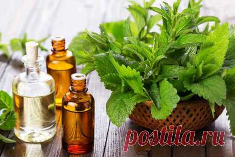 ༺🌸༻Эфирное масло мелиссы - полезные свойства и применение