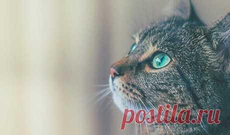 Как кошки чувствуют болезни человека и пытаются об этом предупредить Кошки известны своим безразличием к происходящему вокруг, не так ли? Но действительно ли им все равно, какие эмоции переживают их владельцы и как у них обстоят дела со здоровьем? Кошки чувствуют болез...
