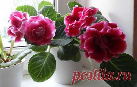 Аптечное средство, которое заставит цвести даже самые капризные комнатные растения | Сад, дом, огород | Яндекс Дзен
