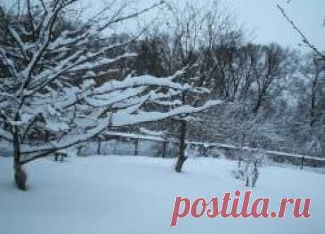 La preparación de los árboles para el invierno: cuando y que cubrir el huerto en otoño