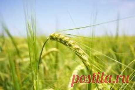 Сегодня 28 мая в народном календаре Пахом Теплый, Пахом-Бокогрей