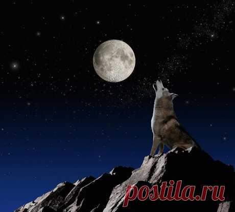Картинки волка воющего на луну (35 фото) ⭐ Забавник