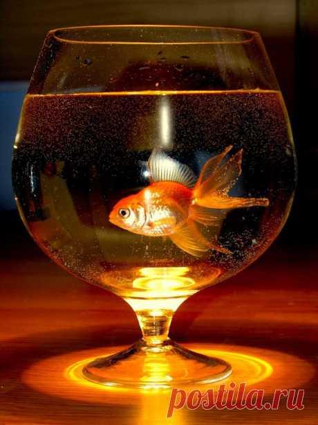 Попросил блин Хоттабыча хорошо уметь плавать и много пива.