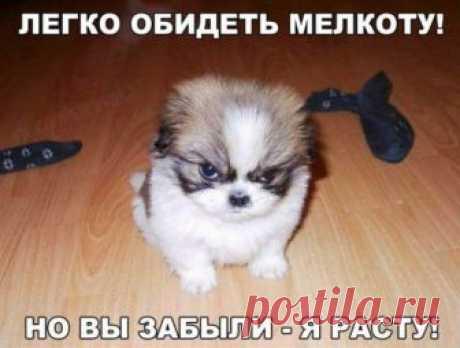 https://img13.postila.ru/resize?w=460&src=%2Fdata%2Fe6%2Fc8%2F27%2Feb%2Fe6c827eb971b9e3812f6976850ea284a3676b64d4622b6c467b66e5392b32fcb.jpg