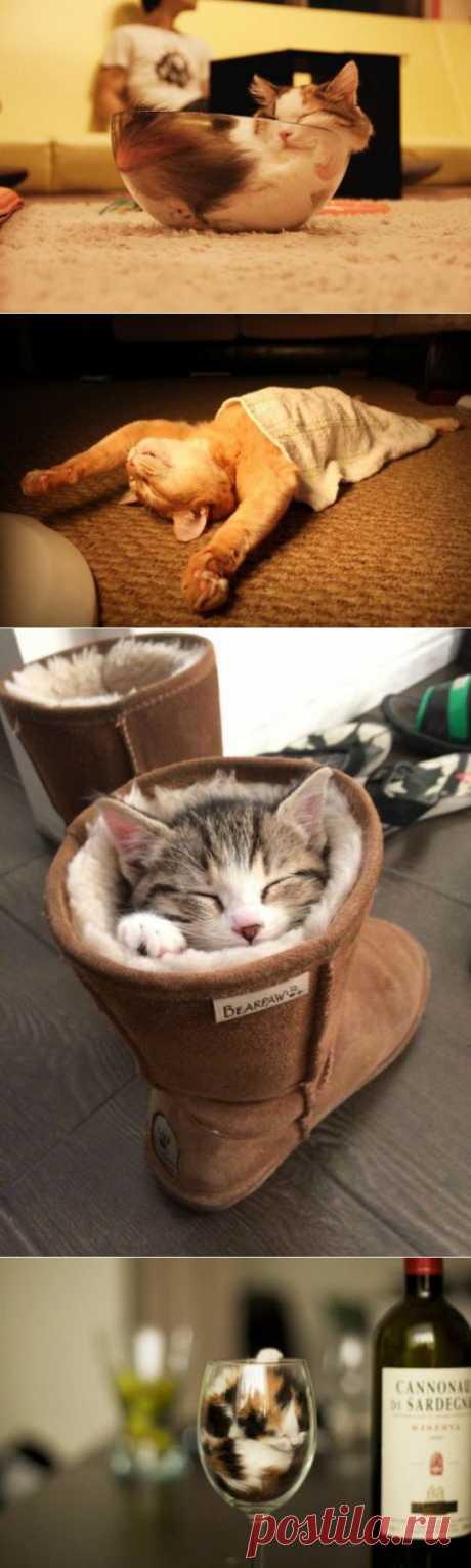 (+1) сообщ - Коты знают толк в сне | ПРИКОЛЫ