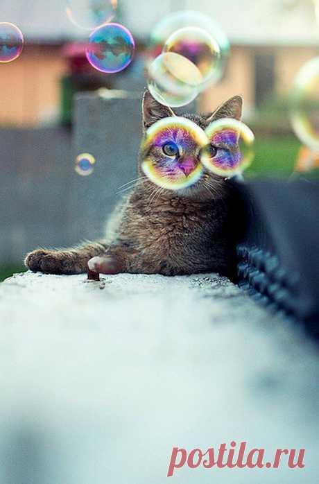 Bubbles - Imgur