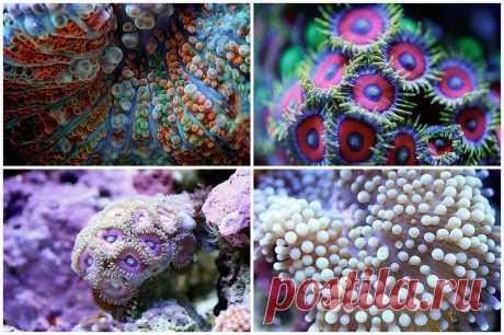 Удивительная макросъемка кораллов • НОВОСТИ В ФОТОГРАФИЯХ