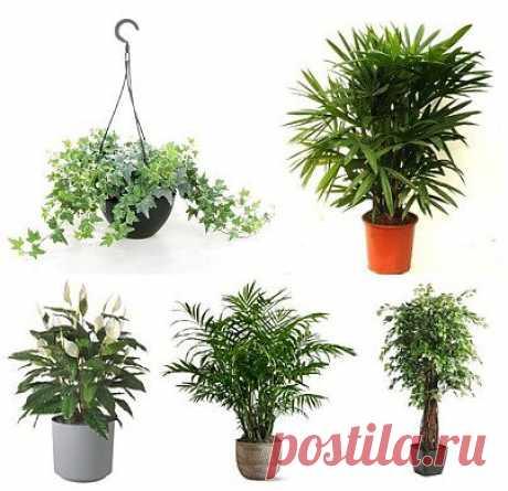 ТОП-5 комнатных растений, которые должны быть в каждом доме!.
