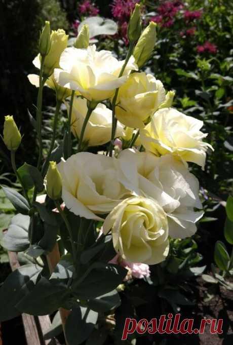 Какие цветы можно посеять в январе на рассаду. | Klumba-plus.ru | Яндекс Дзен
