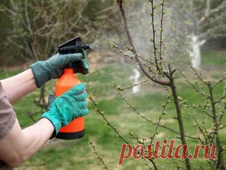 Обработка сада ранней весной мочевиной
