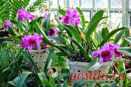 Чем подкормить орхидею в домашних условиях?