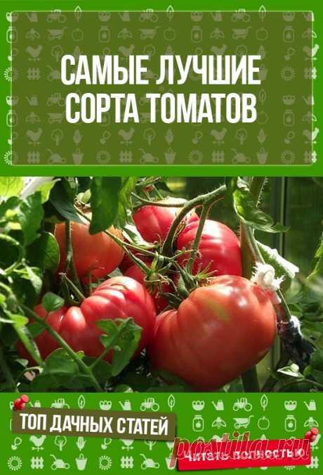 Не дурно,обязательно приму к сведению - Самые лучшие сорта томатов