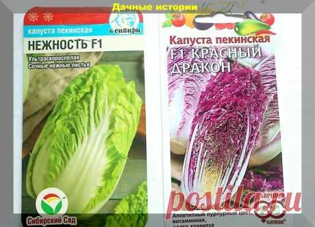Советы по выращиванию пекинской и других видов листовой капусты, гарантирующие крупные кочаны | Дачные истории | Яндекс Дзен
