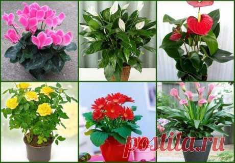 5 секретов ухода за цветами.