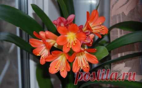 Цветут красиво, но в солнце не нуждаются: шесть комнатных растений, которые можно поставить в тени, а они все равно будут радовать пышным цветением