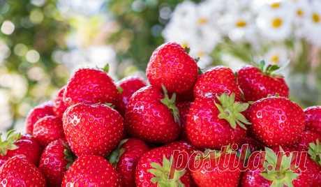 Подкормка клубники во время плодоношения: чем подкормить клубнику в домашних условиях